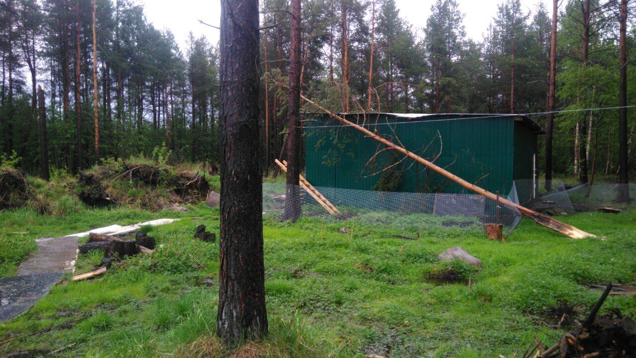Разгул стихии в Апатитах: сорванная крыша и поваленные деревья